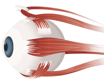 Visualización del ojo